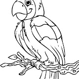 how-to-draw-a-cartoon-parrot-step-6.jpg