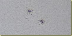 Spots 30 June 2011 a JPEG