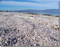 Salton Sea CA 017