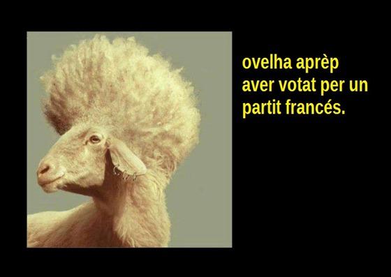 ovelha qu'a votat per un partit francés