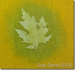 Silver Maple, heliographic print by Sue Reno