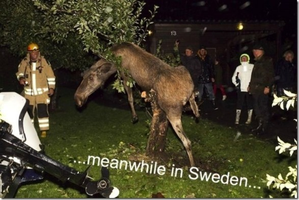 meanwhile-sweden-20