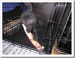 20120228_dogs-bones_006