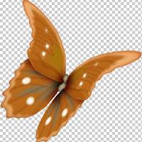 butterfly6c.jpg