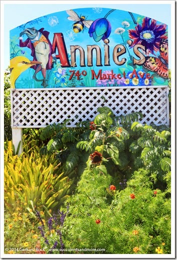 Labor Day visit to Annie's Annuals