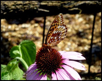 03d - Butterflies