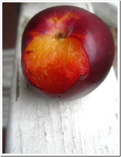red plum middle