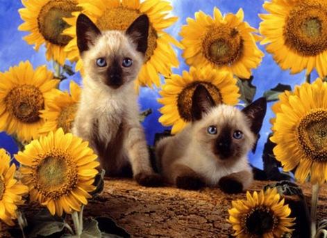 Fotografia-Gatos-con-giraso