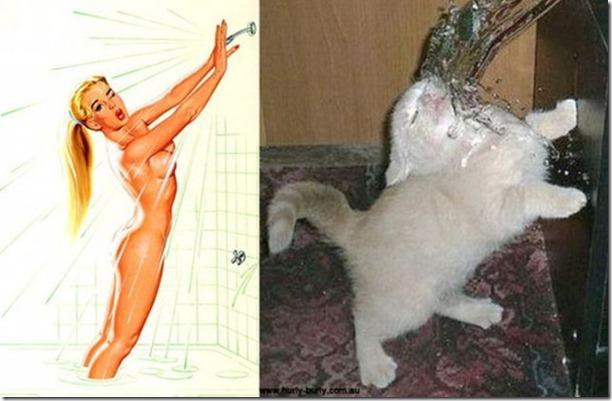 cats-pinup-models-22