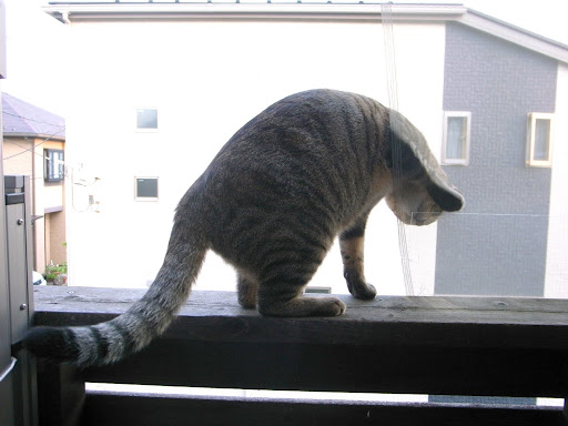 [写真]脱走ガードの具合を確認するグスタフ