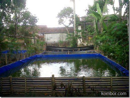 kolam terpal lele 01