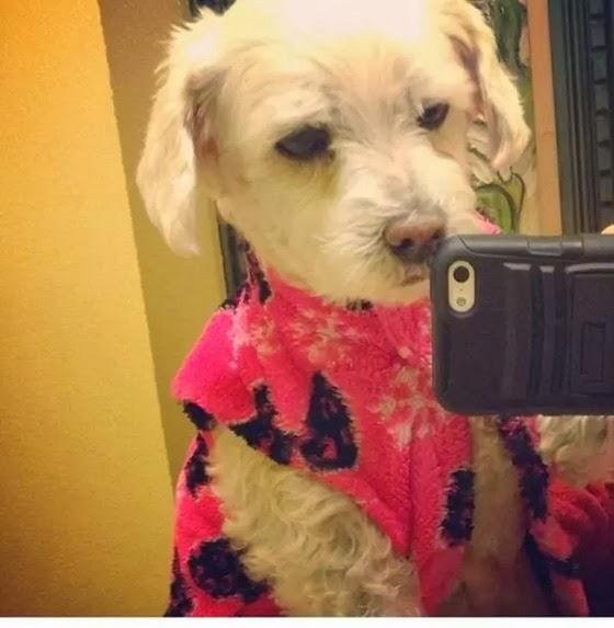 selfie-cachorros-3