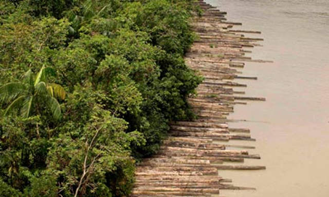 Confiscated illegally logged timber floats down the Guam river delta in Pará, Brazil. Reuters / Brazil / guardian.co.uk