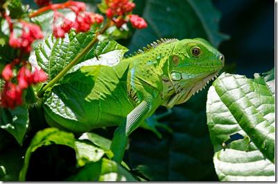 Ciri ciri reptil