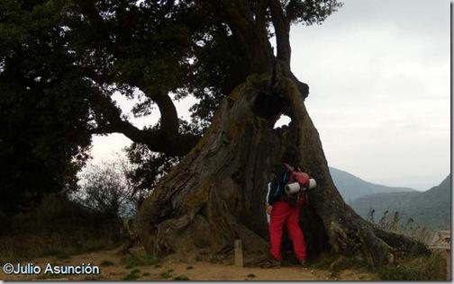 Encina de Eraul - Monumento Natural