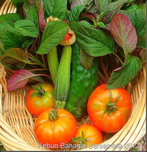 January veggies (4)