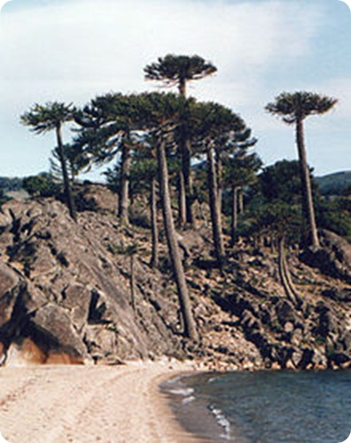 Parque Provincial Araucaria en San Pedro9