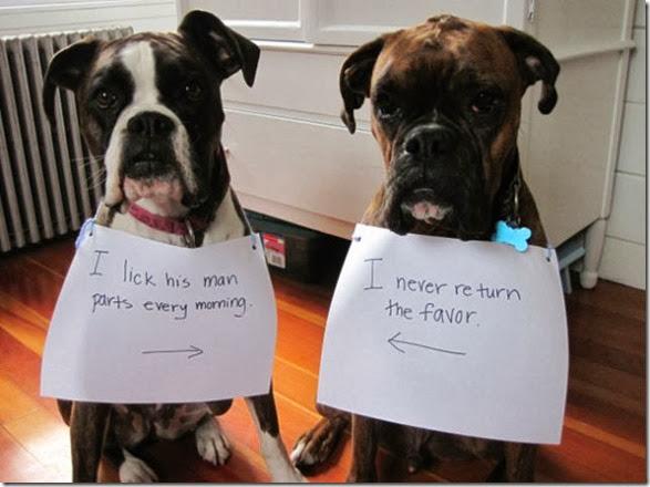 dogs-dirty-secrets-21