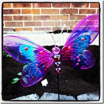 gardenbutterfly