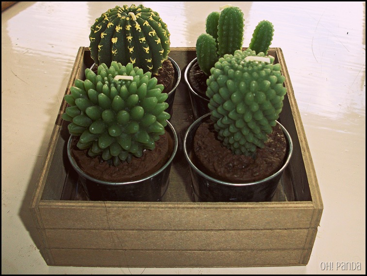 Cactus Candles from Not On The High Street
