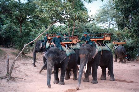 Imagini Angkor Wat: elefanti la apus de soare