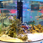 giant aquarium at the SONY building in Ginza, Tokyo in Ginza, Tokyo, Japan