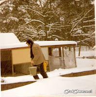 Januari 1979. Een week vrij wegens sneeuwval. Collega's maken materiaal voor de praatmachine en meester Sytsma voert de kippen