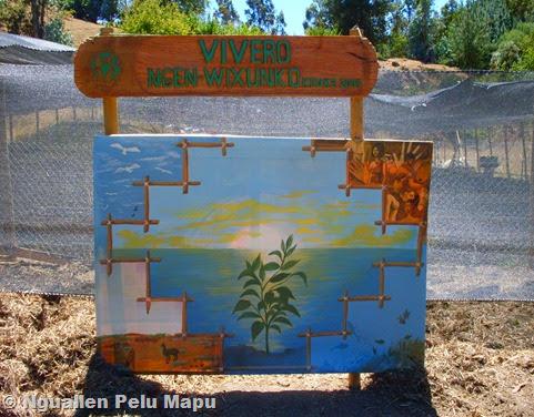 Protectores de la tierra reforestando nativo recuperamos for Vivero agronomia