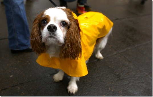 hurricane-sandy-dogs-13