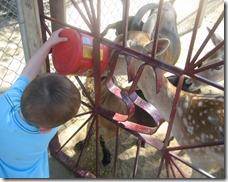 08 04 13 - Sierra Safari Zoo (12)