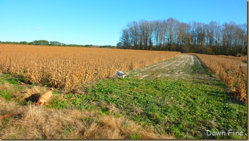 bonnies pond and soy field_006