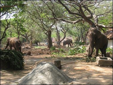 Elephant Sactuary  I