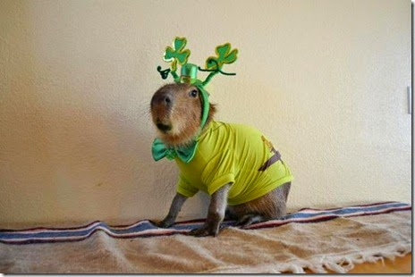 animals-st-paddys-day-007