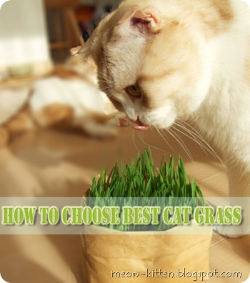 How-to-choose-best-cat-grass