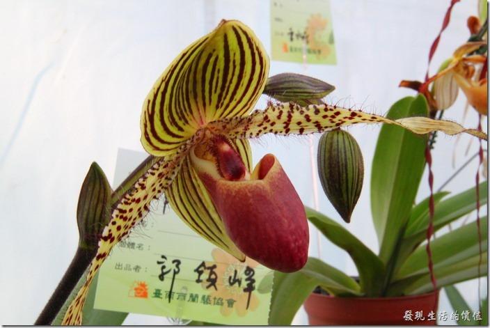 2013台南蘭花展27