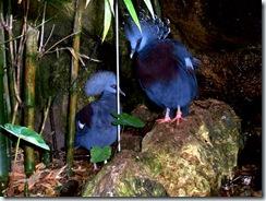 2011.07.26-007 oiseaux dans la serre