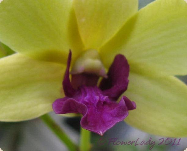 12-09-orchids3