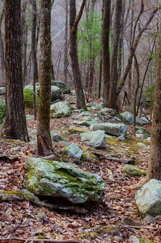 Laurel Snow area visit-17886