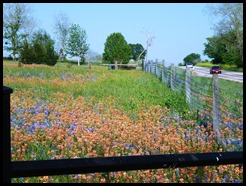 Flowers in yard 3