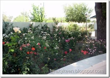 MCC Rose Garden 11