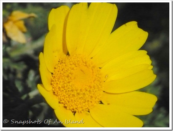 Wild flowers 014-001