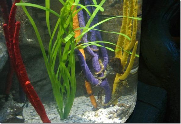 Sea Life Aquarium 224