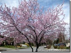 Mar2_Spring