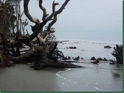 Ocean front walk 010