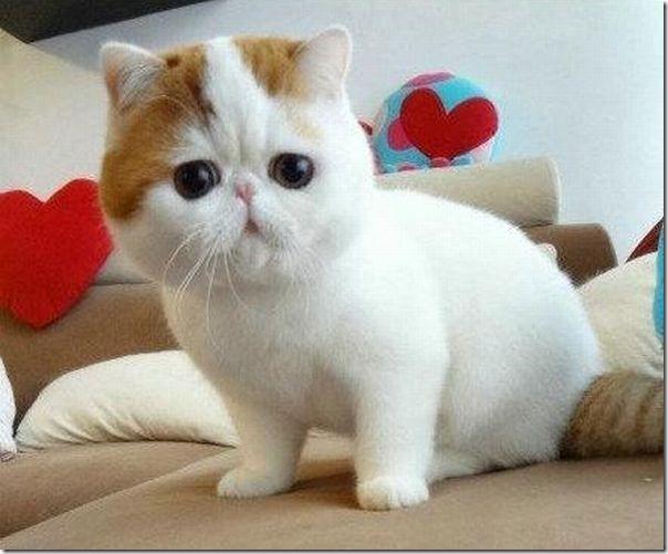 gato tomando banho (7)
