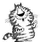 gato-1.jpg