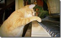 gato pianista blogdeimagenes (31)