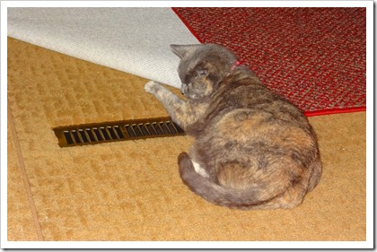 bella on heater