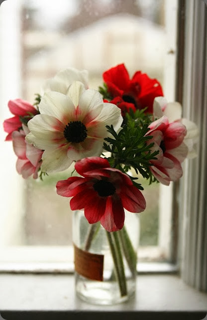 anemone IMG_7790anemones floret