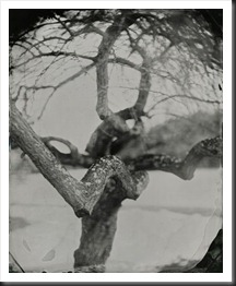 Keliy_Anderson_Staley_Plum_Tree_Connecticut